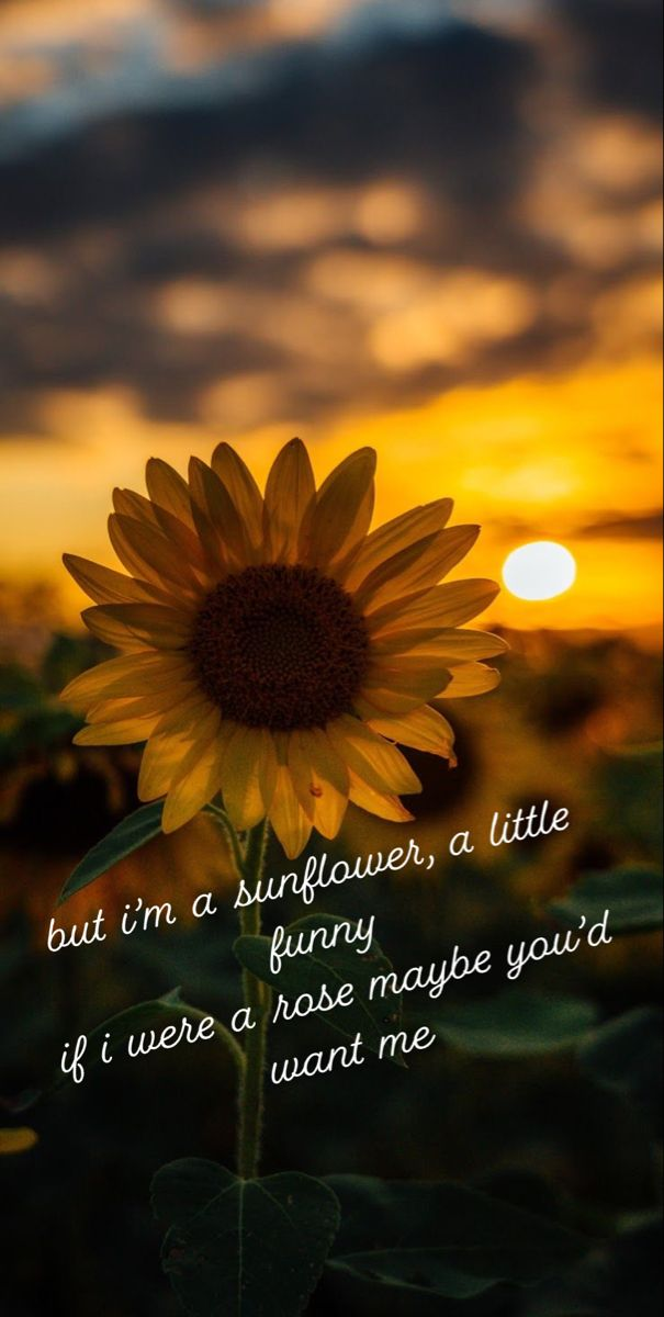sunflower quote   Sunflower quotes, Sunflower, Quotes