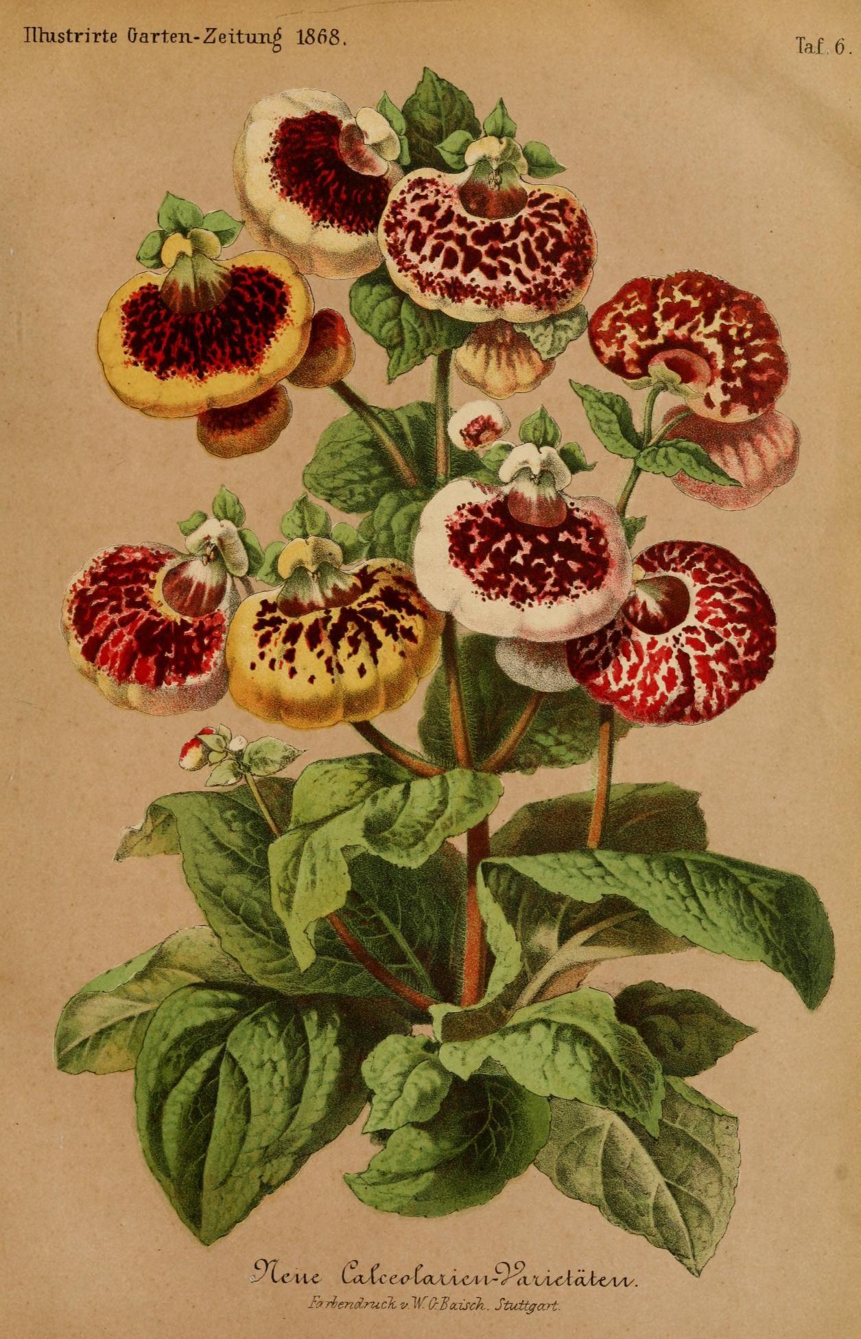 Bd 12 1868 Illustrierte Garten Zeitung Biodiversity Heritage Library Flowers Botanical Prints Flower Art