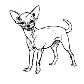 how to draw a chihuahuaface search chihuahua