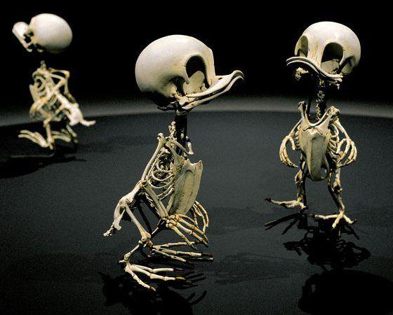 Acquista estate ins super fuoco colore umano scheletro coppia