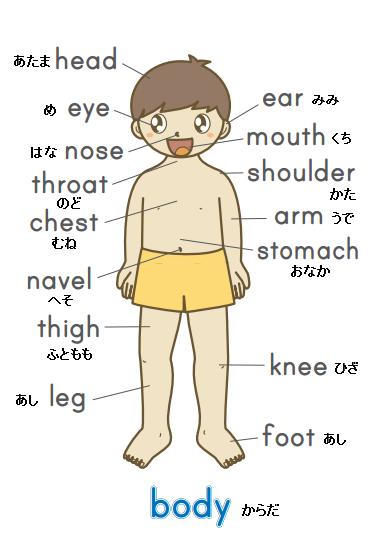 body parts in japanese pdf