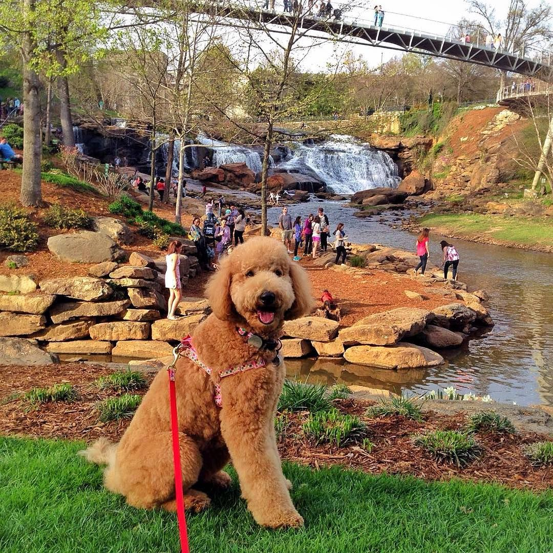 Just Out For Another Lovely Stroll Through Greenville Sc Winnie