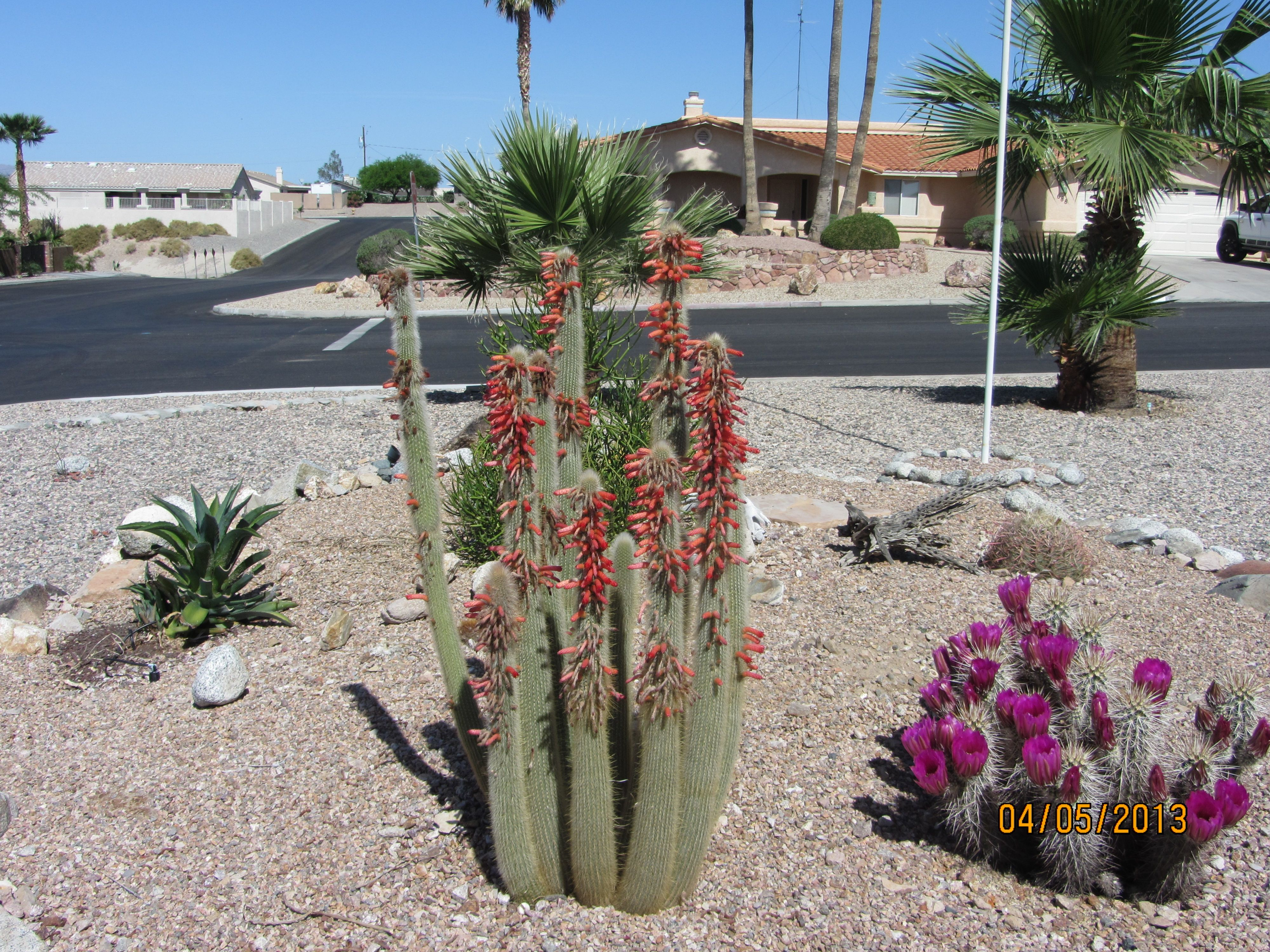 Yard In Lake Havasu Az