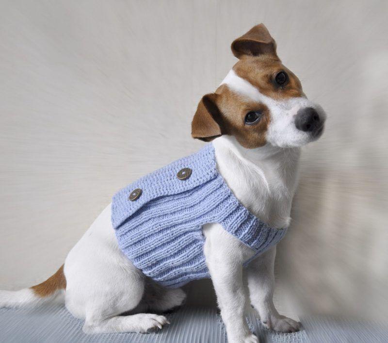 Hundepullover Stricken Und Mit Knöpfen Dekorieren Kézimunka