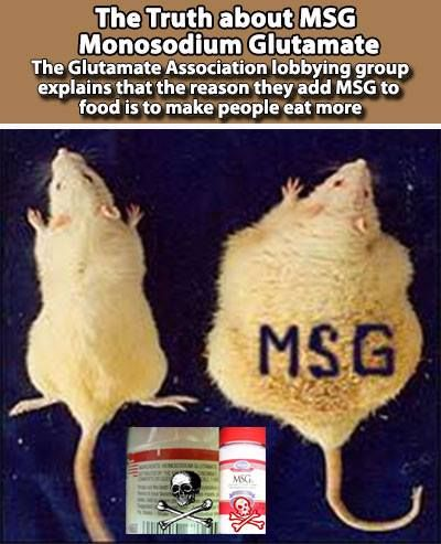 Image result for Guess which rat was fed MSG?