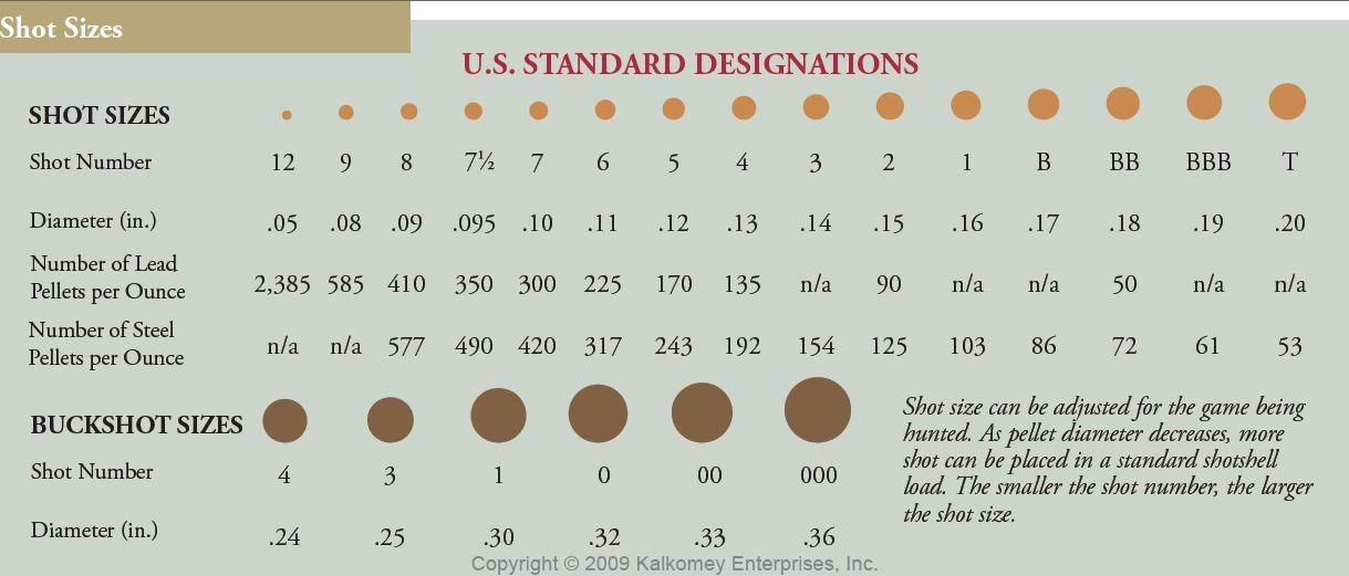 Ammo and gun collector shotgun shell shot size comparison chart