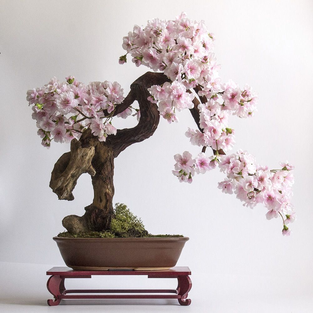 Artificial Bonsai Tree Cherry Bonsai Zokei Sakura Artificialbonsaitree 1000 Indoor Bonsai Tree Bonsai Tree Types Sakura Tree