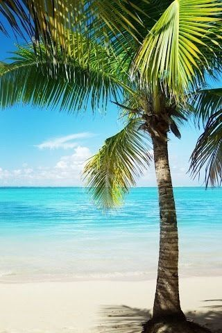 Palm Tree Ocean Beach Background Beach Wallpaper Beach Scenes