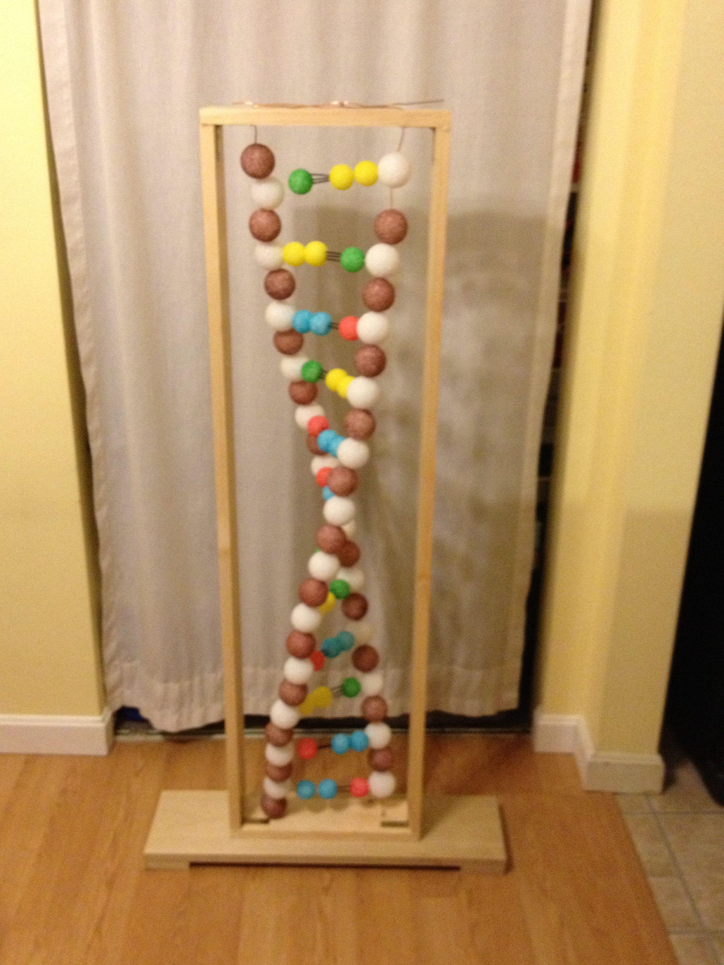 DNA Model Project Ideas
