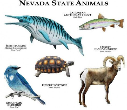 The official animals of the state of Nevada are represented in this design Species included ICHTHYOSAUR  GENUS SHONISAURUS  State Fossil LAHONTAN CUTTHROAT TROUT State Fi...