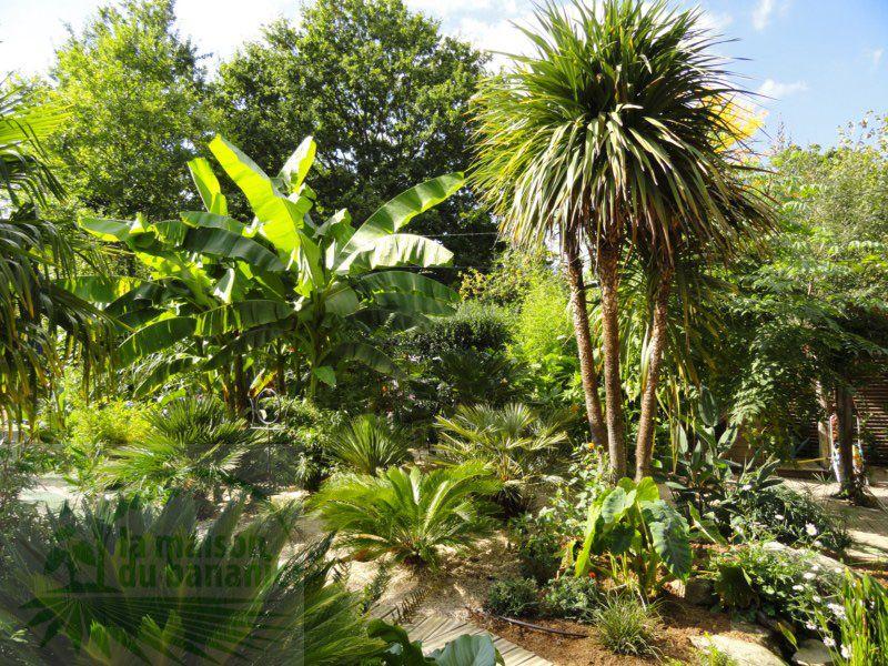 Jungle Creation Jardin Jardins Joli Jardin