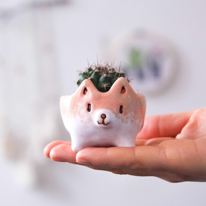 Ceramic cactus pot cute akita succulent pots little