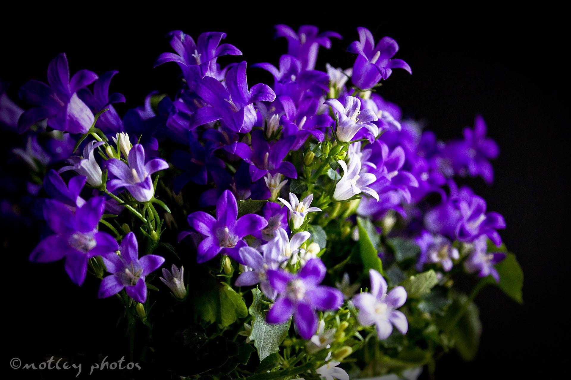 Purple perfectly purple pinterest project 365 mightylinksfo