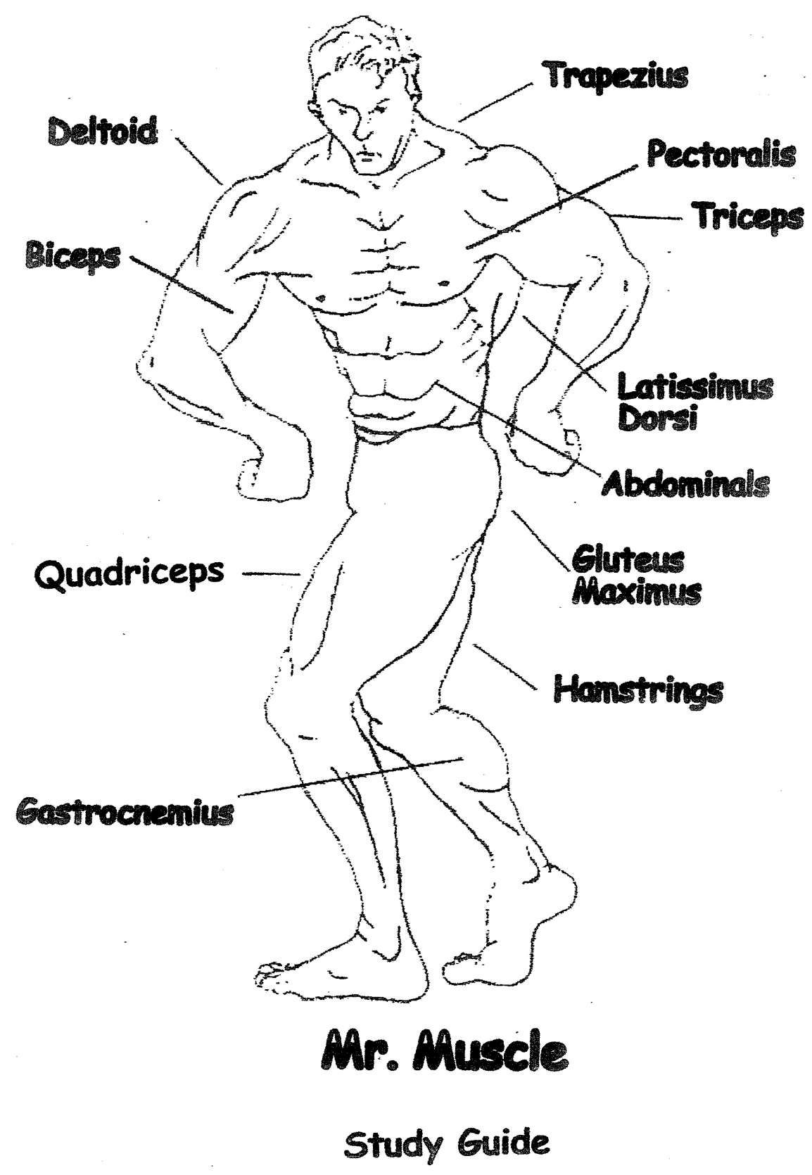 8 Work Those Muscles Worksheet