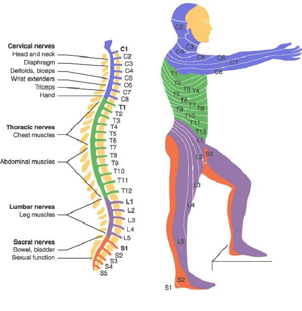 Spinal cord Injury Levels | SCI | Pinterest | Spinal cord, Cord and ...