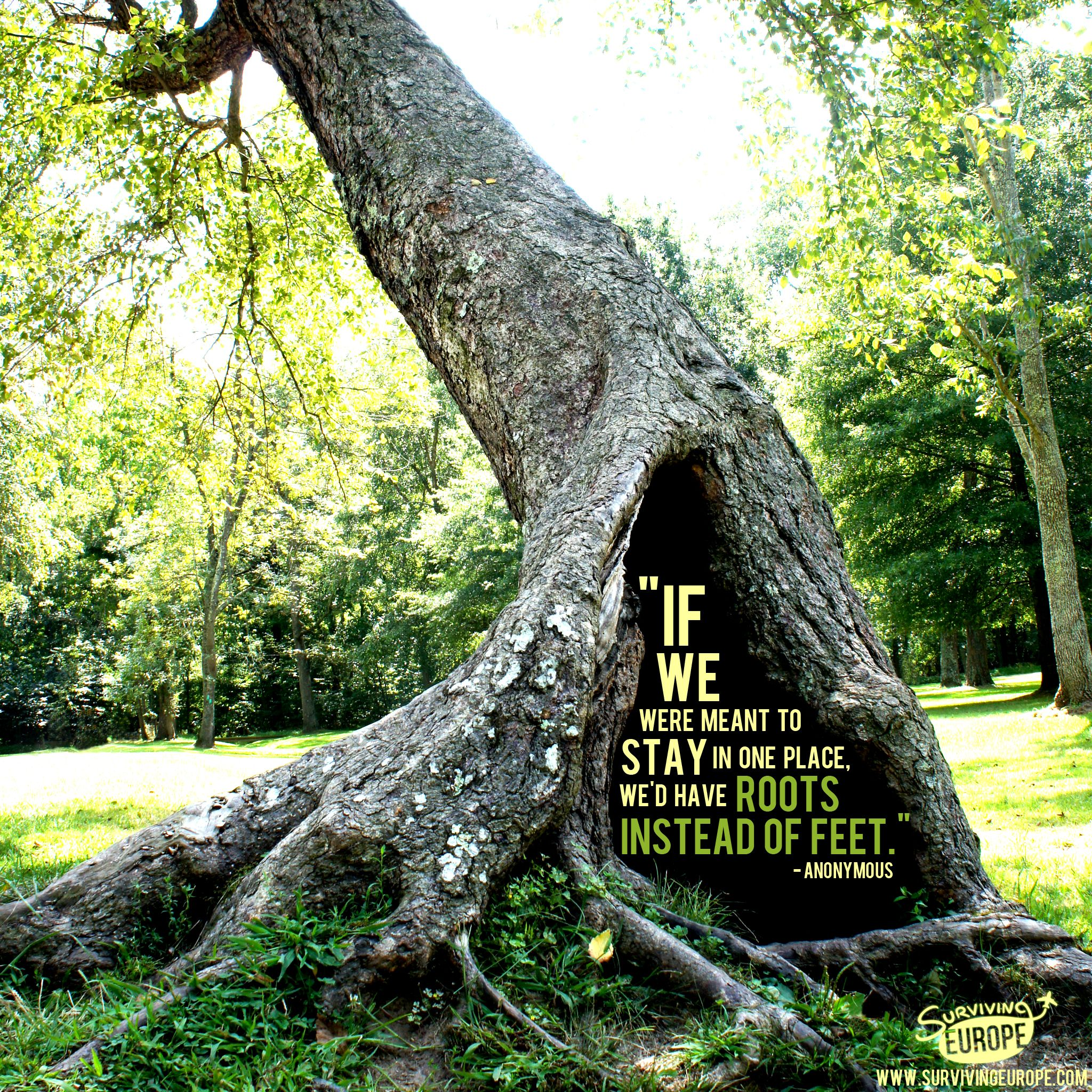 """""""If we were meant to stay in one place, we'd have roots instead of feet."""""""