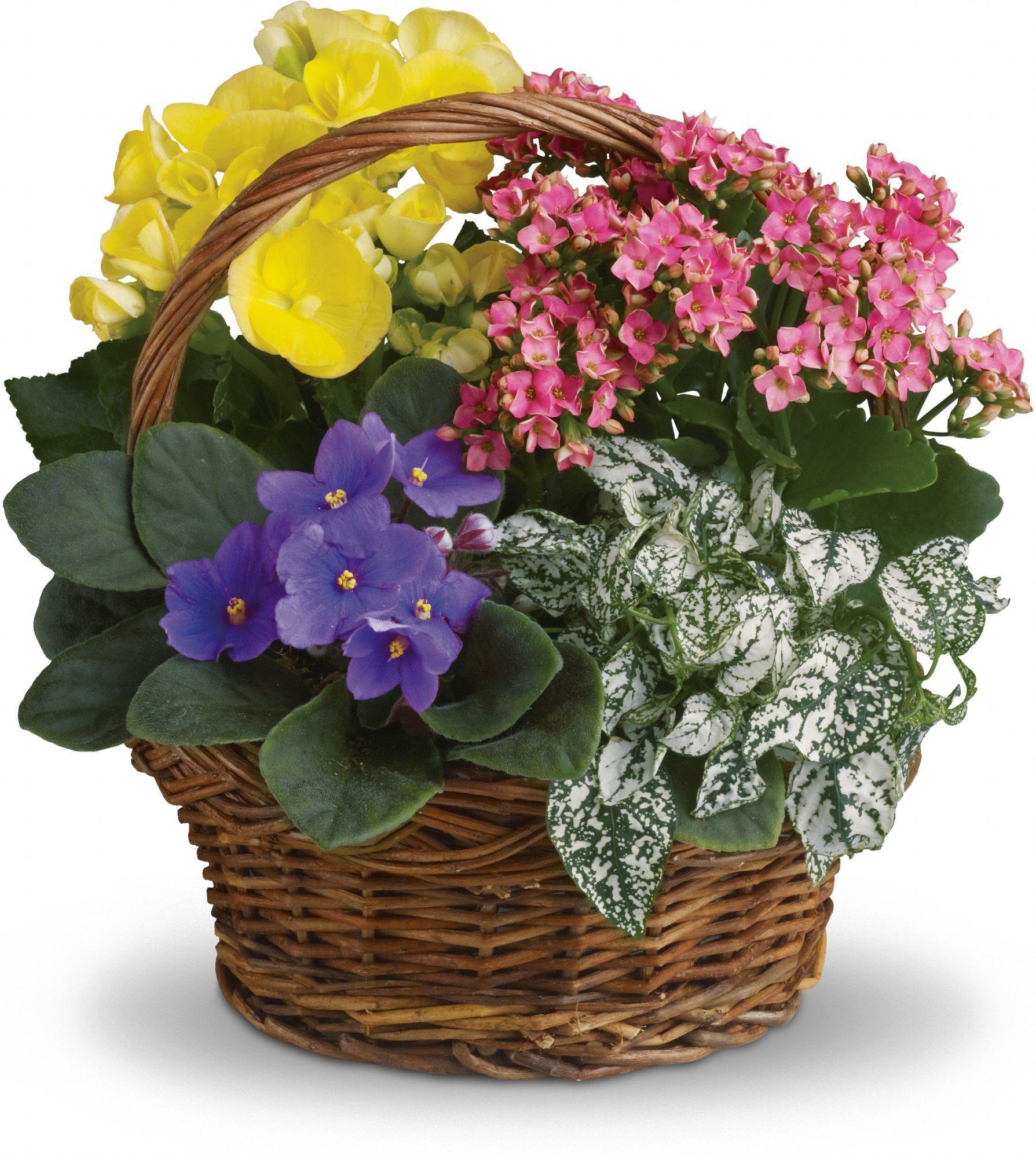 Spring has sprung mixed basket save 25 on this bouquet and many spring has sprung mixed basket delivered by delivered by alberts florist in san luis obispo ca 93401 93405 93407 93408 93410 izmirmasajfo