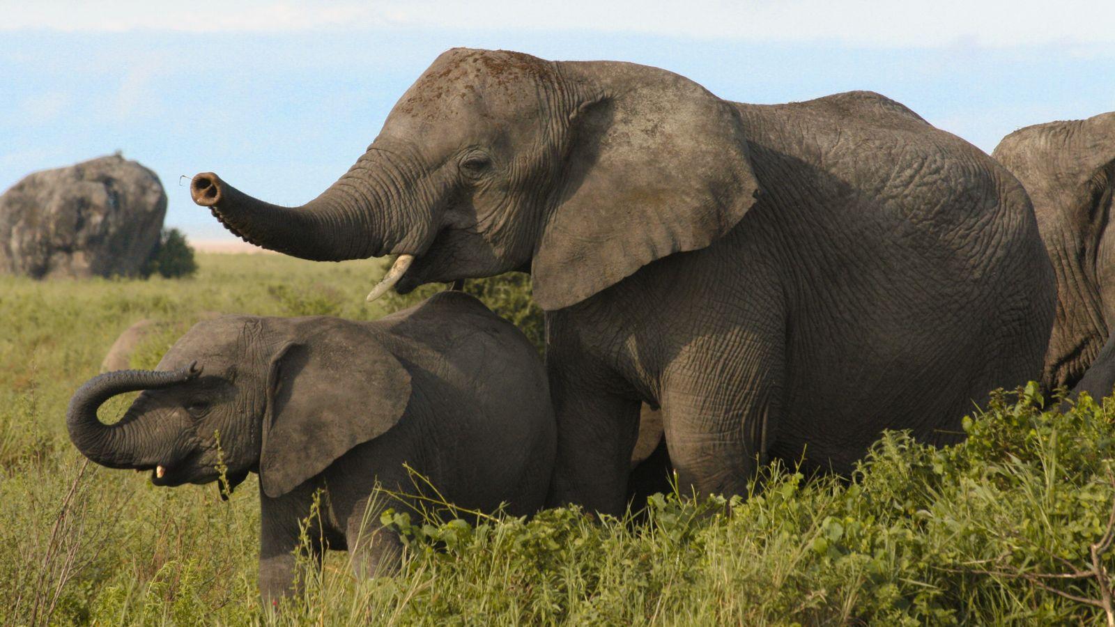 Kusini is a unique combination of habitats with grasslands