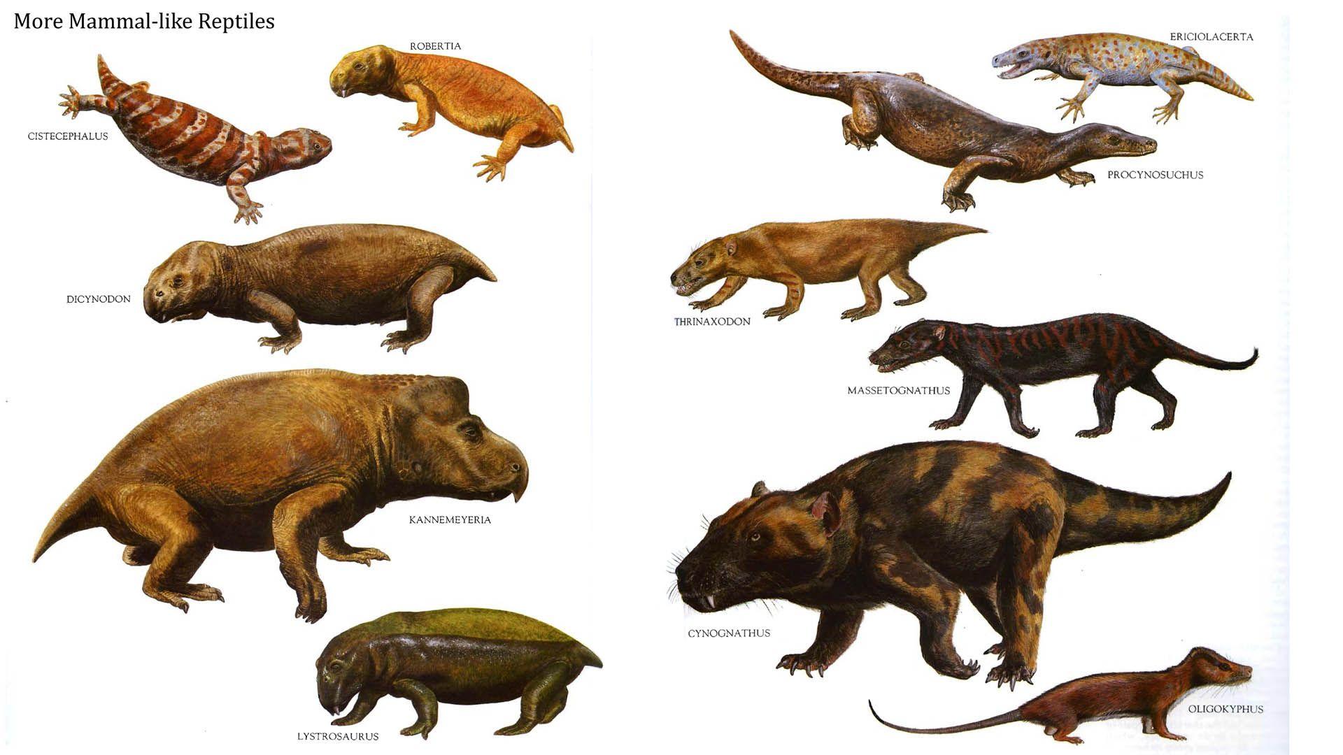 5 Ancient Mammal Like Reptiles