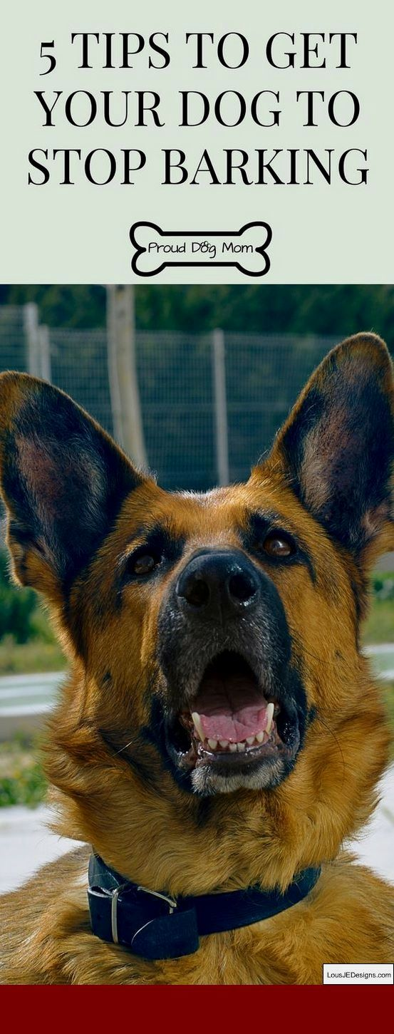 How To Train Your Dog Not To Bark And Lunge At Other Dogs And Pics