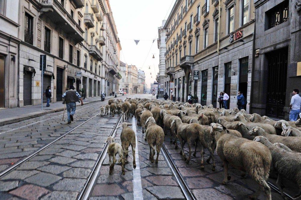 The Last Shepherd (L'Ultimo Pastore)