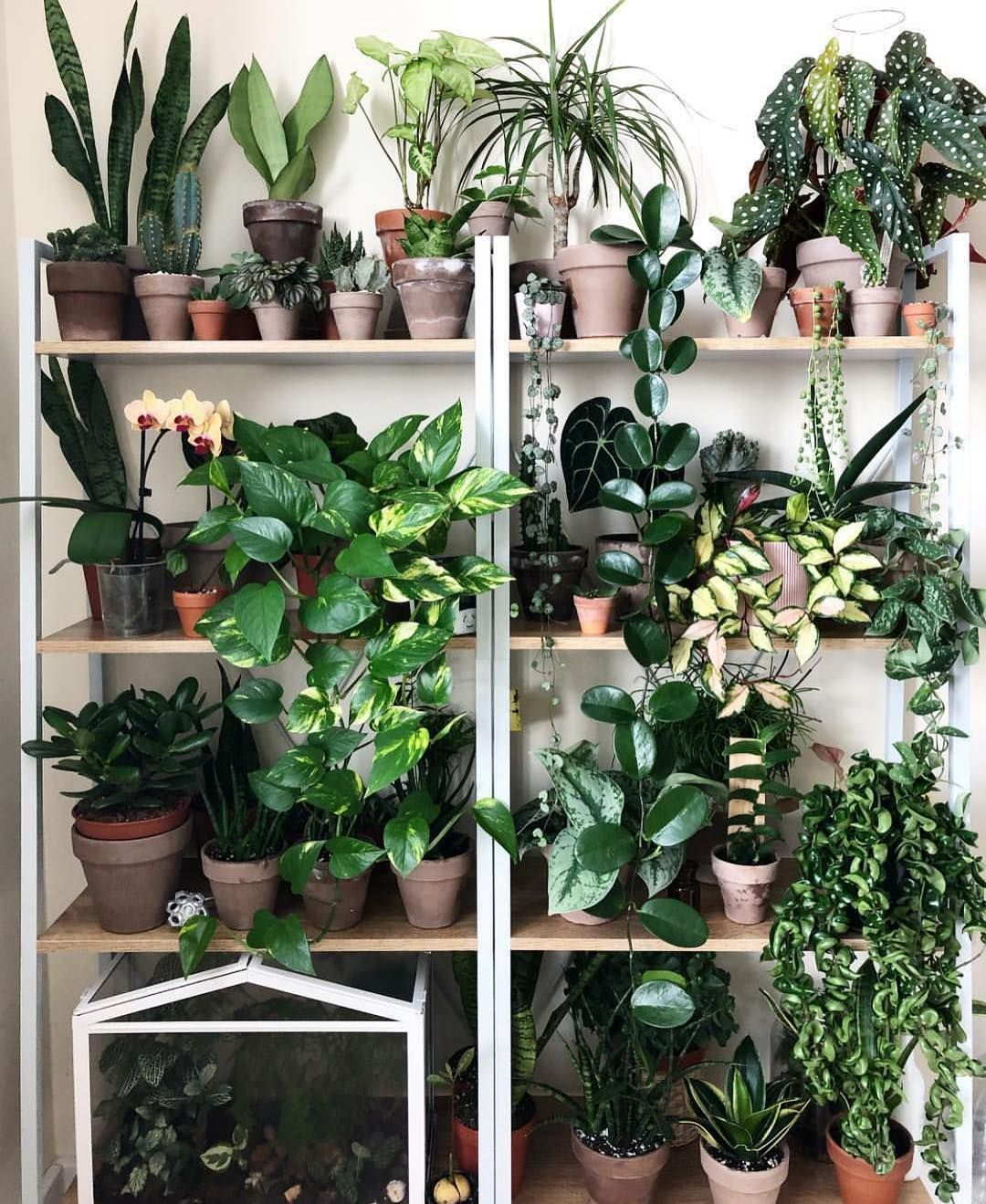 House Plants For Shady Rooms: In The Instance, In The Event The Room Proved To Be A