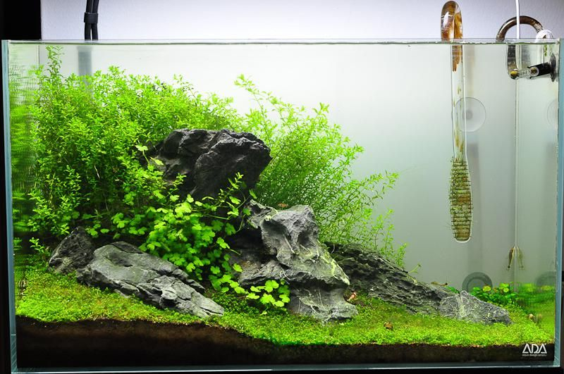 Upgraded fluval spec V - first high tech tank, watch me ...