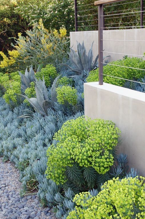front yard design | Succulent landscape design, Succulent ...
