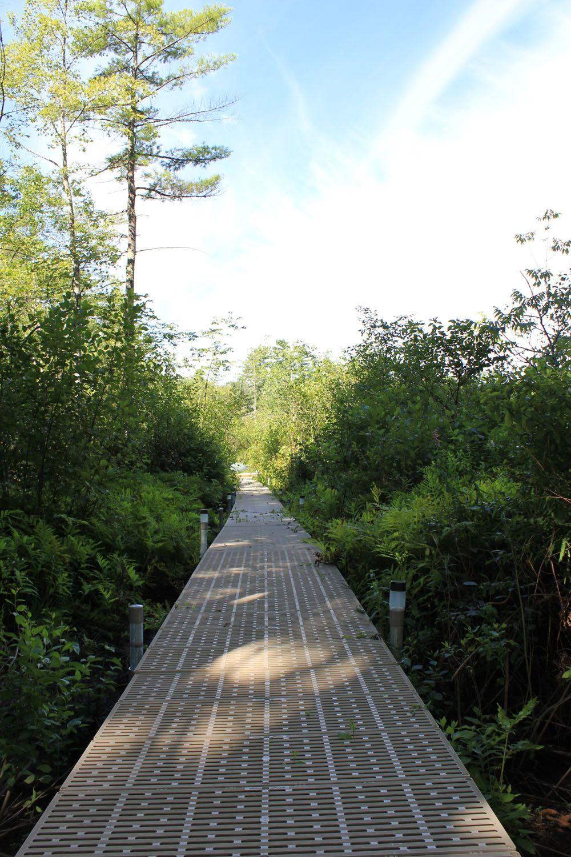 Merveilleux Canopy Walkway, Canopy Boardwalk, Nature Boardwalk, Nature Trail, Above  Ground Walkway.