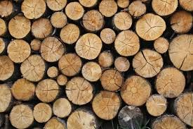 Image result for Nature's patterns, designs, lines and textures