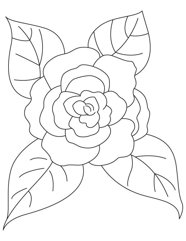 Camellia With Four Leaves Coloring Page Leaf Coloring Page Coloring Pages Black Cat Art
