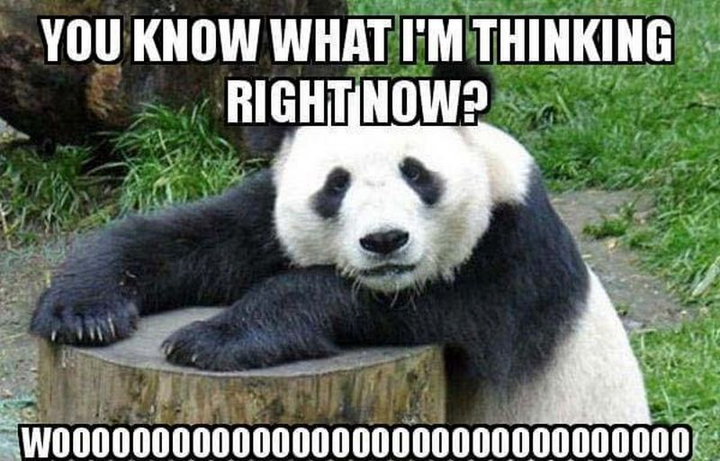 77 Funny Thinking Of You Memes For That Special Person On Your Mind Baby Panda Panda Panda Bear