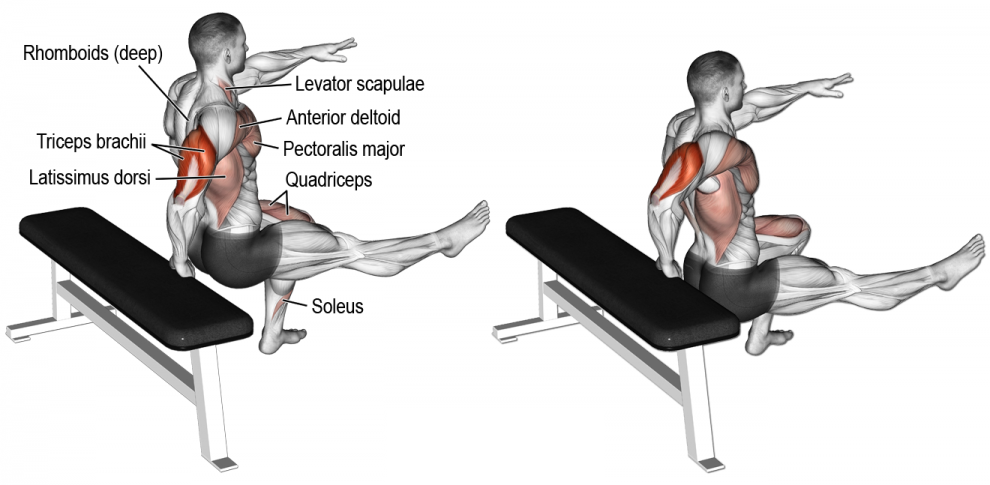 Comment effectuer les Dips sur banc unilatéral - triceps | Anatomie ...