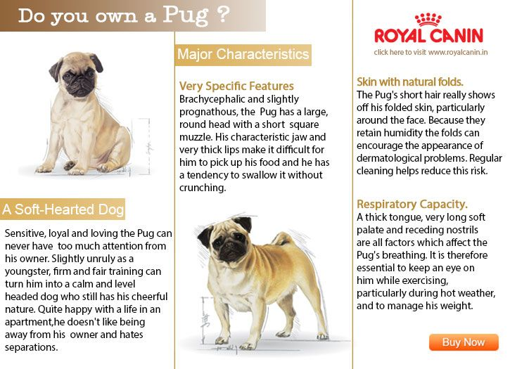 Read Interesting Facts About Your Pug For More Visit Www Dogspot