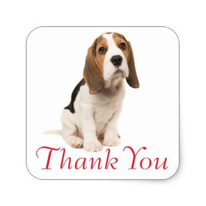 #Beagle Puppy Dog Red Thank You - Wedding Party Square Sticker - #beagle #puppy #beagles #dog #dogs #pet #pets