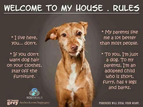 House Rules I Live Here You Don T If You Don T Want Dog Hair
