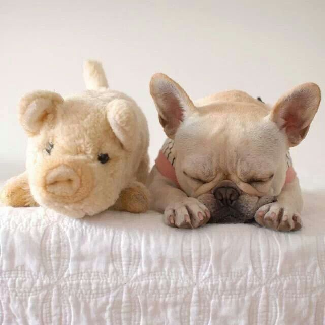 Pin By Lauren Wood Wilmington Nc On Frenchies Cute Animals Baby Animals Cute Puppies