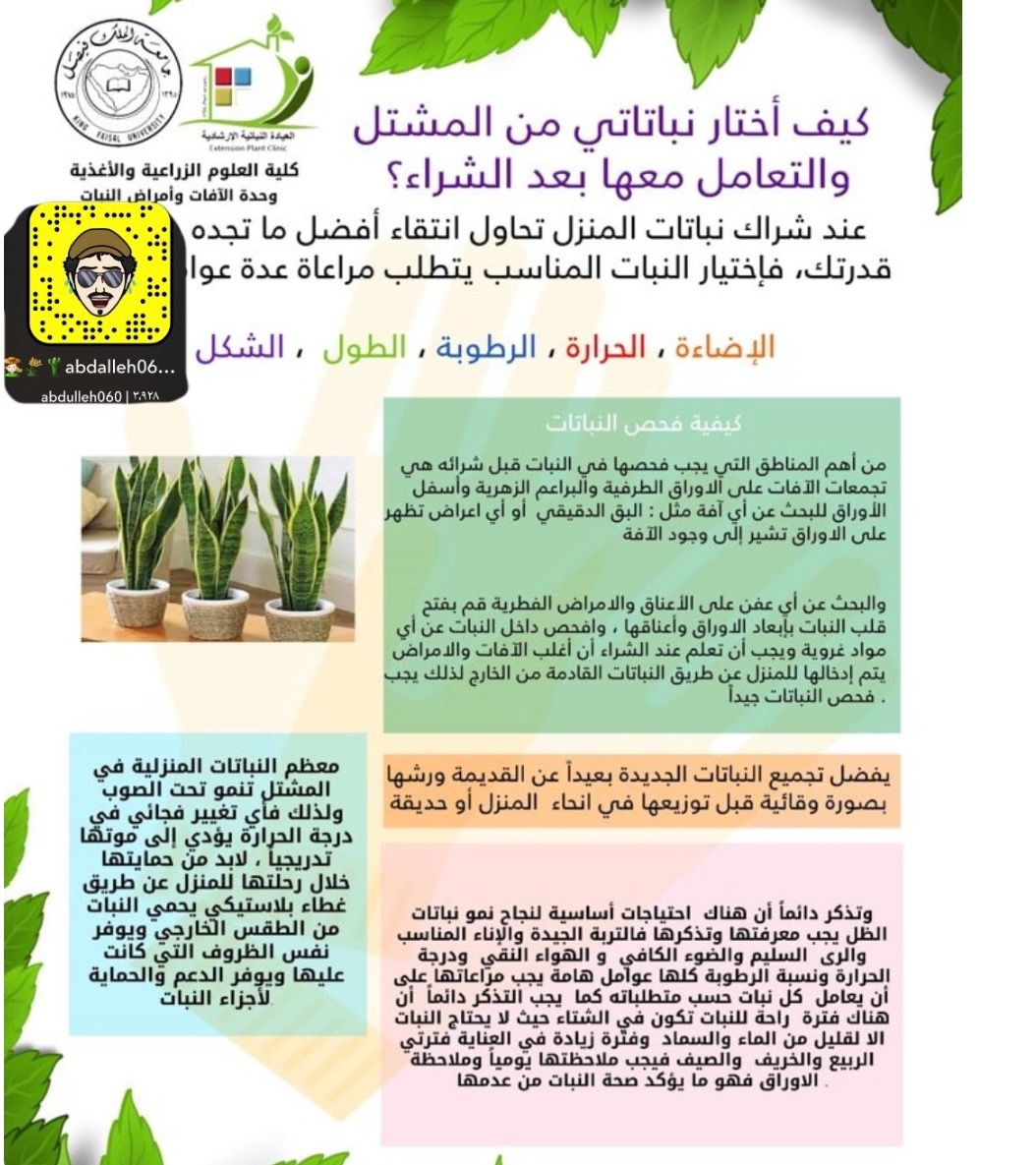 Pin By Nawal Alkhudari On نصائح زراعية Plants Projects To Try Garden
