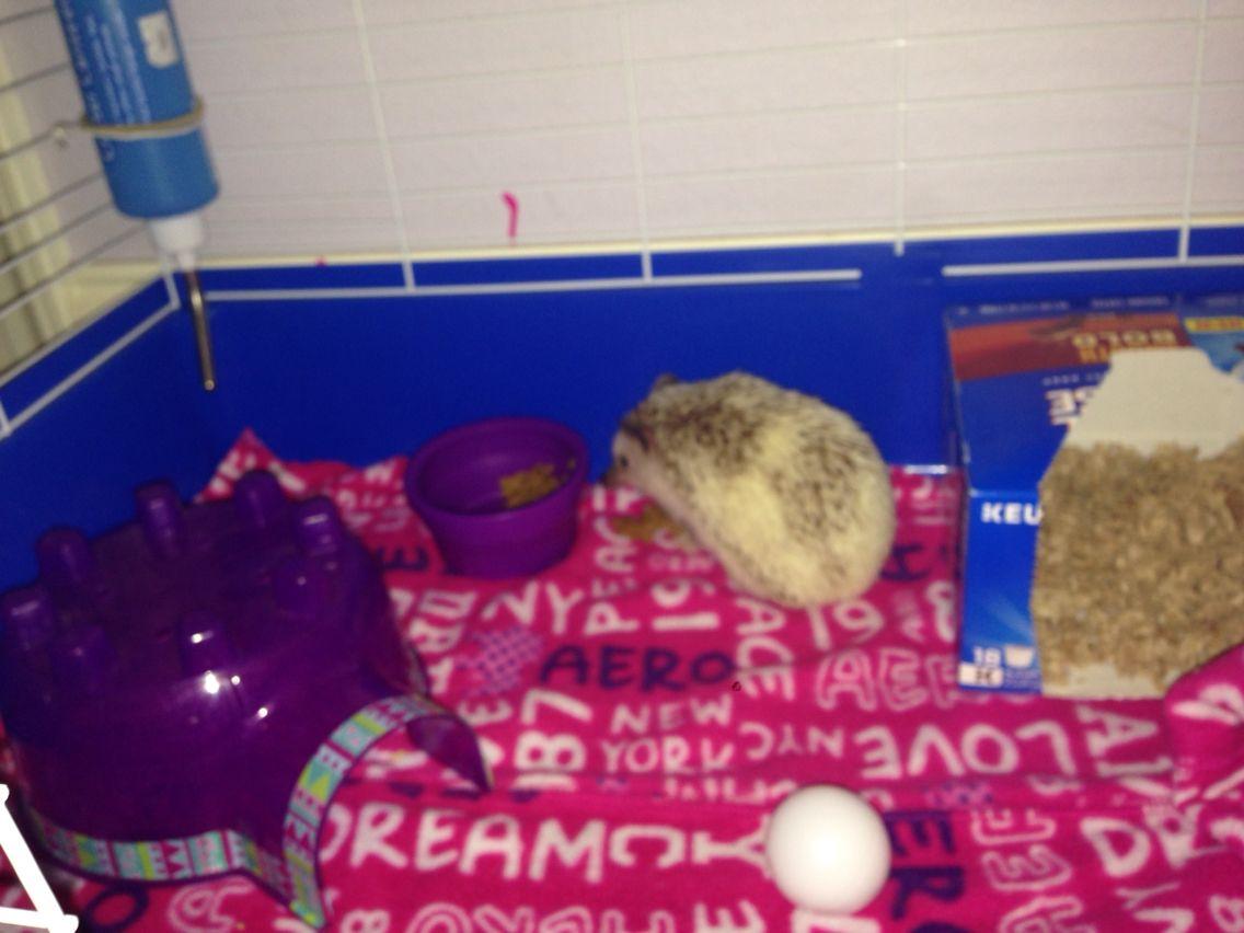 Best Hedgehog Cage Felt Bottom Ping Pong Ball Coffee Box W