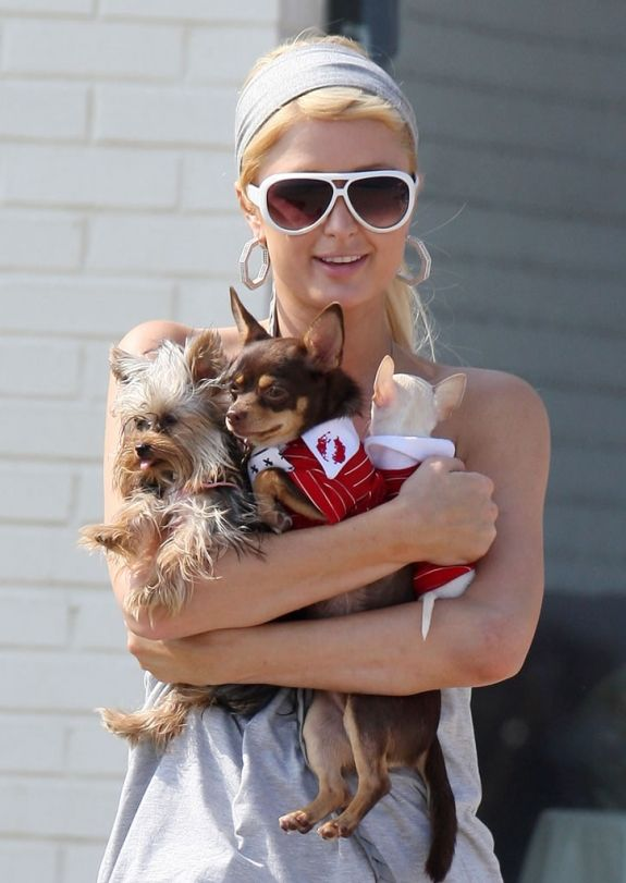 Celebrity Paris Hilton with her dogs