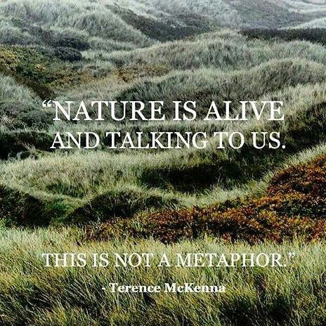 Nature Is Alive and Talking To Us ~ This Is Not A Metaphor ⊰♡⊱ Terence McKenna