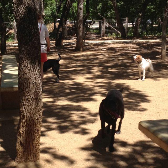 Hardberger Dog Park Dog Park Dogs Park