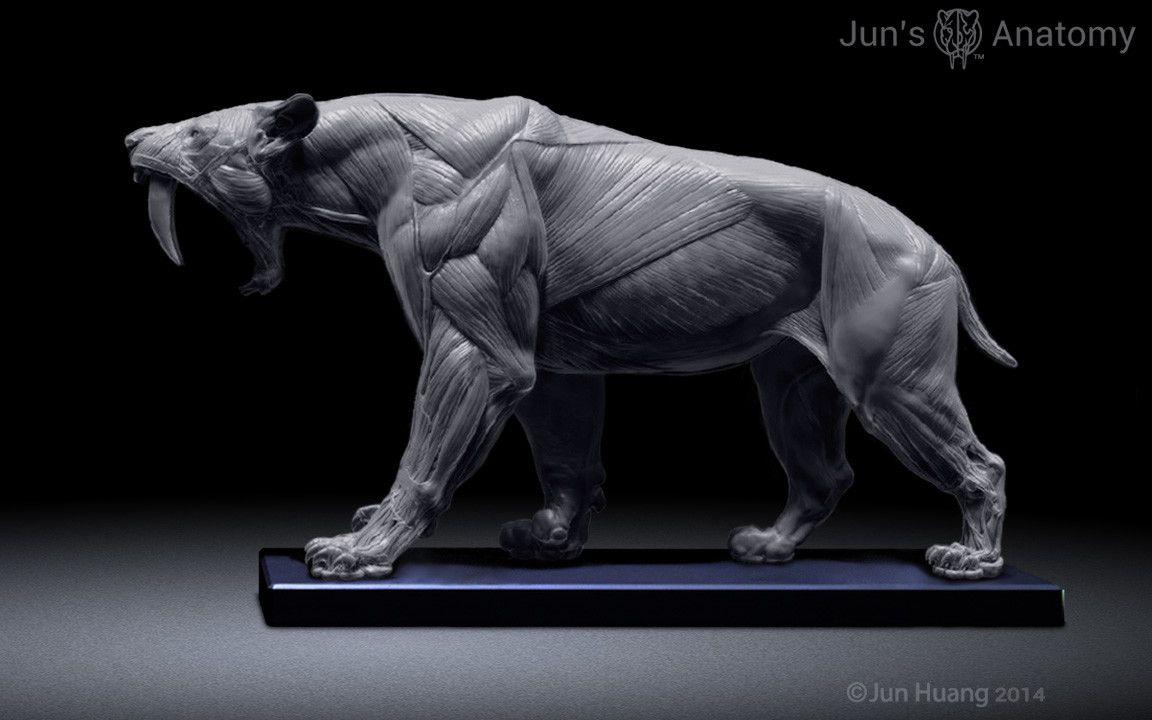 Smilodon anatomy model, Jun Huang on ArtStation at https://www.artstation.com/artwork/od84B