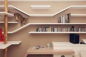 Bildresultat för cat shelf