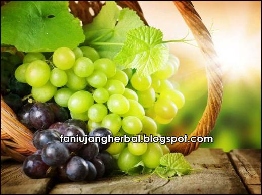 Manfaat Buah Anggur Merah Dan Hijau
