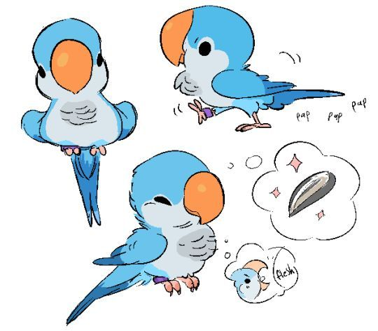 Animal Character Design Birds Quaker Parrot By Zooque Find