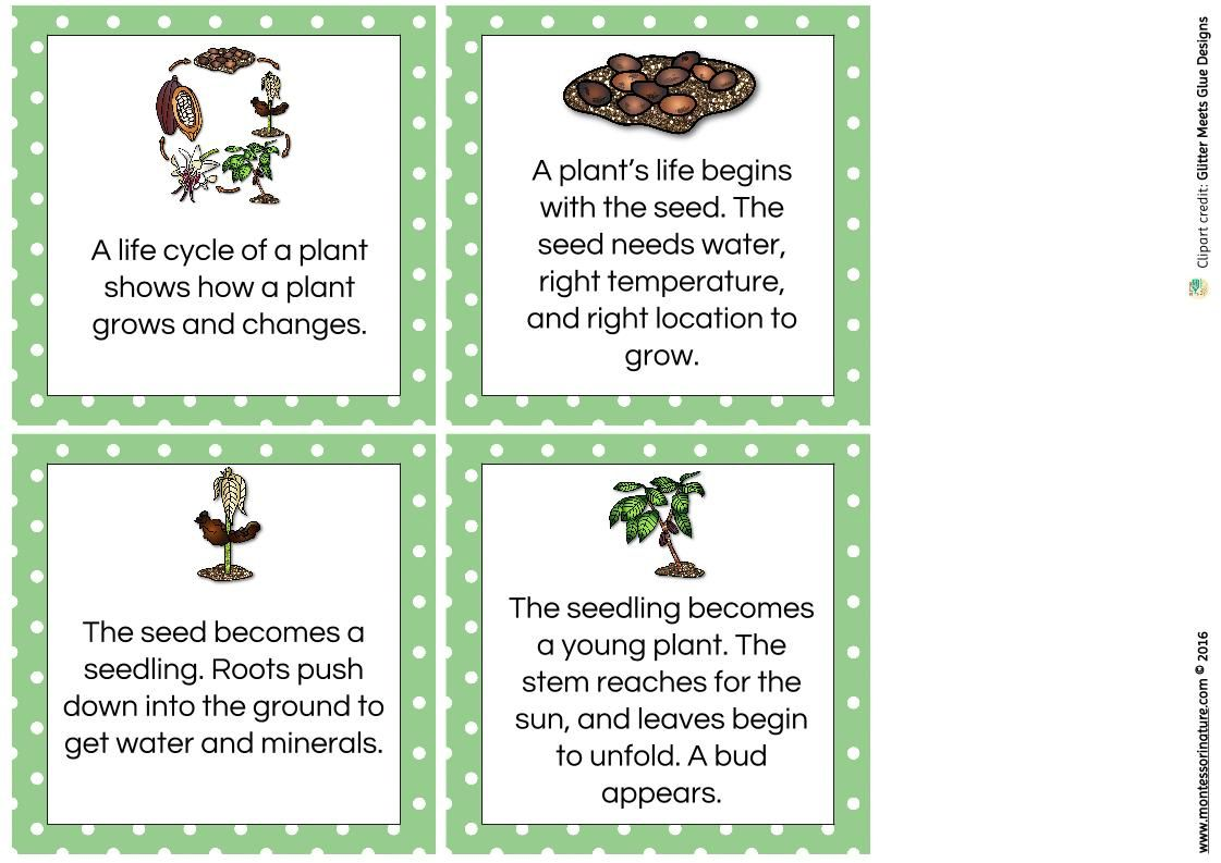 Plant Life Cycle In