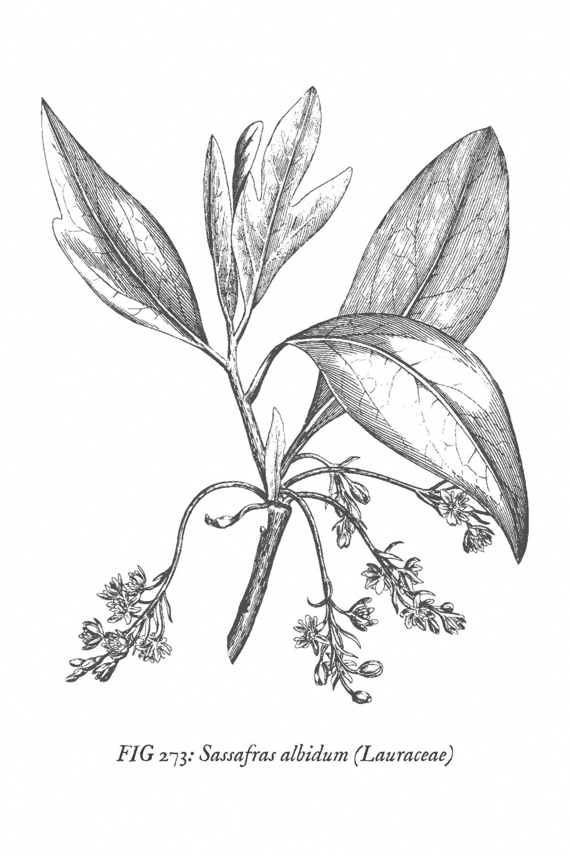 Set Of Six Free Printable Vintage Botanical Wall Art Prints Use These Free Printables To Create A Be Vintage Botanical Prints Botanical Prints Wall Art Prints