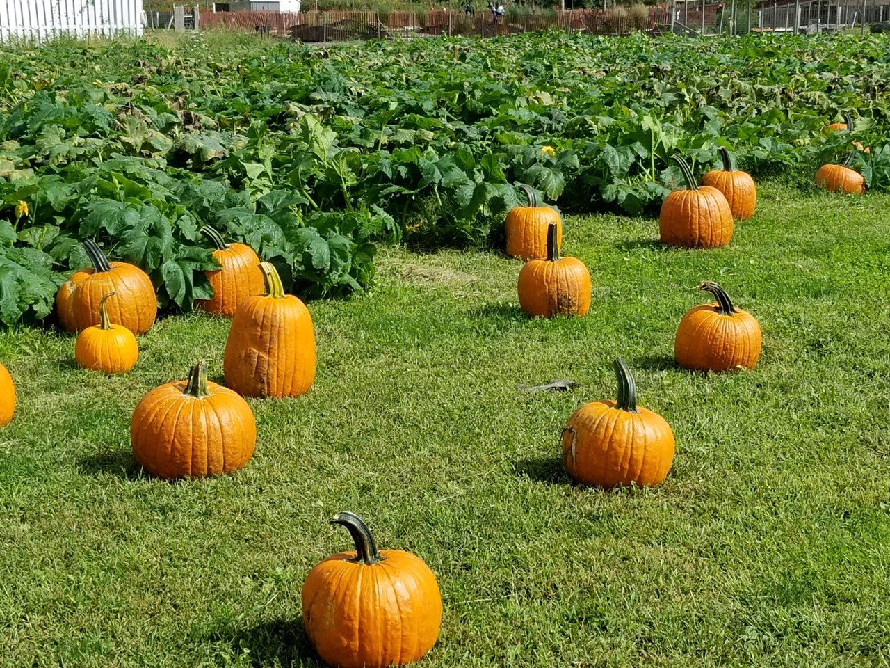 Check out the Best Pumpkin Patch in Your State (Some Even Have Petting Zoos!) (With images ...