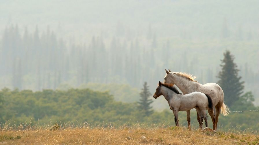 Couple Horses Hd Wallpaper Download High Resolution Horse Wallpaper Horses Beautiful Horses
